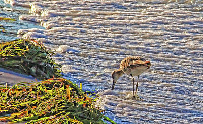 Photograph - Willet Walk by HH Photography of Florida