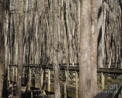 Photograph - William B Clark Conservation Area Rossville Tn 2 by Lizi Beard-Ward