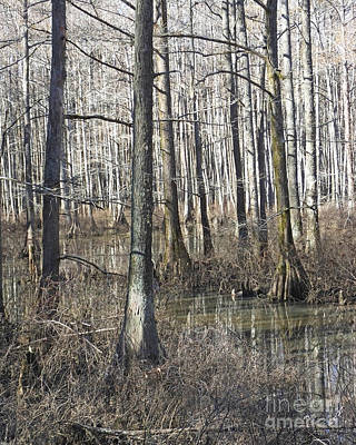 Photograph - William B Clark Conservation Area Wolf River Rossville Tn 6 by Lizi Beard-Ward
