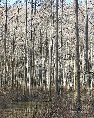 Photograph - William B Clark Conservation Area Wolf River Rossville Tn 7 by Lizi Beard-Ward