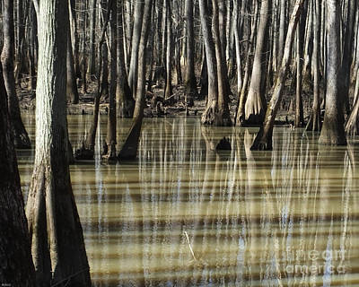 Photograph - William B Clark Conservation Area Wolf River Rossville Tn 9 by Lizi Beard-Ward