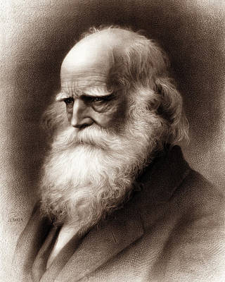 Cullen Wall Art - Drawing - William Cullen Bryant  by War Is Hell Store