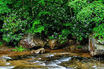 Photograph - Williams River And Rhododdendron by Thomas R Fletcher