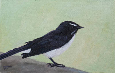 Painting - Willie Wagtail  by Masami Iida
