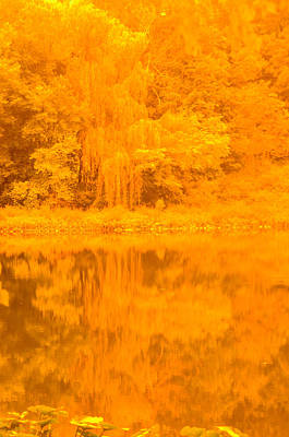 Photograph - Willow And Trees Along The Inland Lake by Randy J Heath