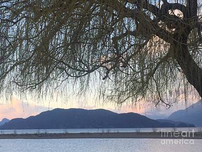 Photograph - Willow By The Lake by Victor K