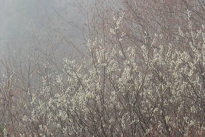 Photograph - Willow Catkins In Fog by Robert Potts