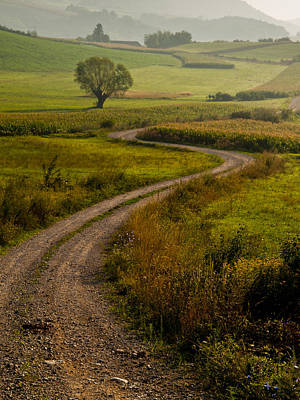Gravel Road Photograph - Willow by Davorin Mance