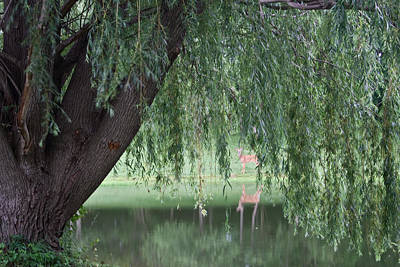 Willow Lake Photograph - Willow Deer by Dylan Punke