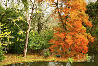 Furnas Photograph - Willow In Autumn Colors by Gaspar Avila