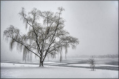 Photograph - Willow In Blizzard by Erika Fawcett