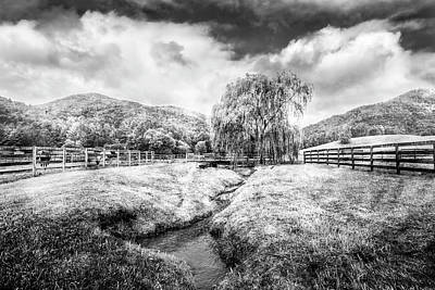 Photograph - Willow In Early Autumn Black And White by Debra and Dave Vanderlaan
