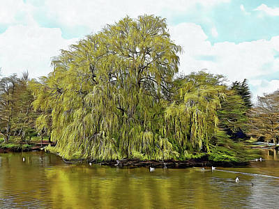 Photograph - Willow Island On Falmer Pond by Dorothy Berry-Lound