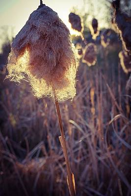 Photograph - Willow No.2 by Desmond Raymond