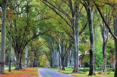 Willow Oak Trees Art Print