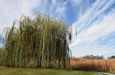 Photograph - Willow Path by Kathy M Krause