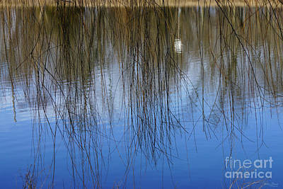 Photograph - Willow Pond Abstract by Jennifer White
