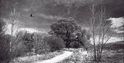Photograph - Willow Preserve With Ravens by Sandra Selle Rodriguez