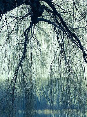 Photograph - Willow Tree by Barbara Budish