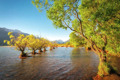 Photograph - Willow Trees Glowing In The Sun Light At Glenorchy Wharf by Daniela Constantinescu