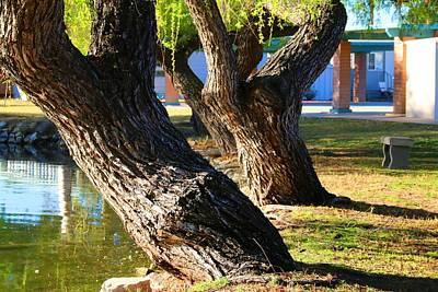 Photograph - Willow Trees by Kathryn Meyer