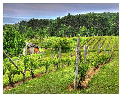 Photograph - Willow Winery by Trey Foerster