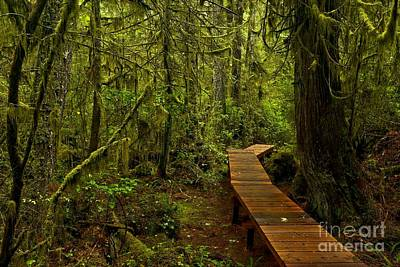 Photograph - Willowbrae Rainforest Boardwalk by Adam Jewell