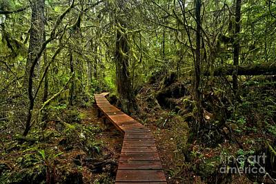 Photograph - Willowbrae Rainforest Hiking Trail by Adam Jewell