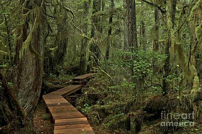 Photograph - Willowbrae Rainforest Landscape by Adam Jewell