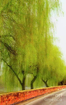 Photograph - Willows A Weeping by Linsey Williams