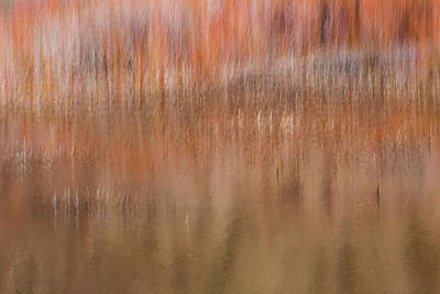Photograph - Willows And Reeds Along Dugout Pond by Deborah Hughes