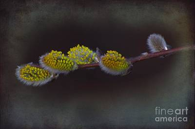 Willows Of April Art Print by The Stone Age
