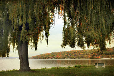 Photograph - Willows Of Stewart Park by Jessica Jenney