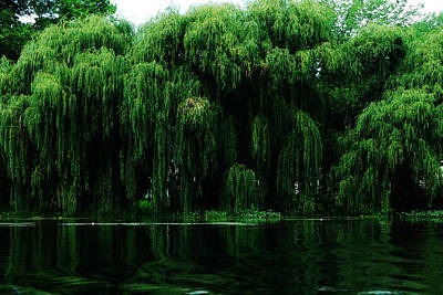 Weeping Willow Photograph - Willows Weeping by Simone Hester