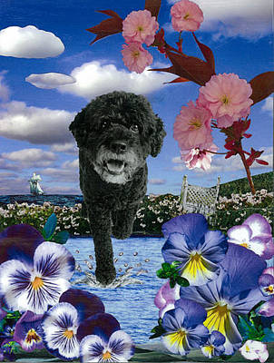 Portuguese Water Dogs Mixed Media - Willy Come by Moira McLaughlin