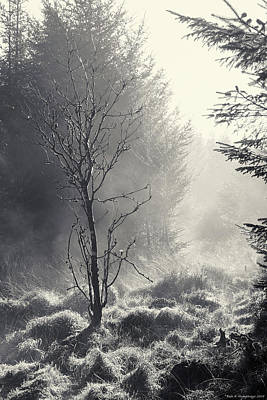 Photograph - Wilsey Woods Rebel In The Mist by Bear R Humphreys
