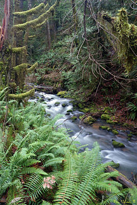 Photograph - Wilson Creek #14 by Ben Upham III