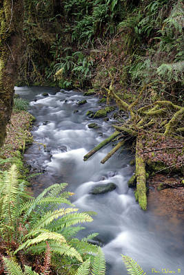 Photograph - Wilson Creek #20 by Ben Upham III