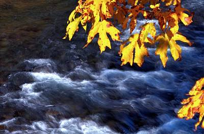 Photograph - Wilson River Fall 19606 by Jerry Sodorff