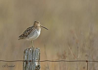 Photograph - Wilson's Snipe On A Post by CR Courson