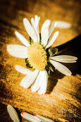 Yellow Daisy Wall Art - Photograph - Wilt by Jorgo Photography - Wall Art Gallery