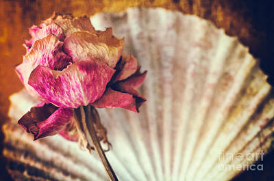 Photograph - Wilted Rose And Shell by Silvia Ganora