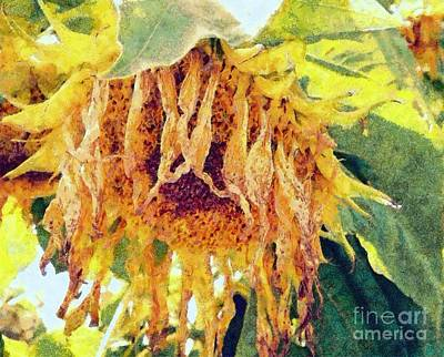 Photograph - Wilted Sunflower - What A Day by Janine Riley