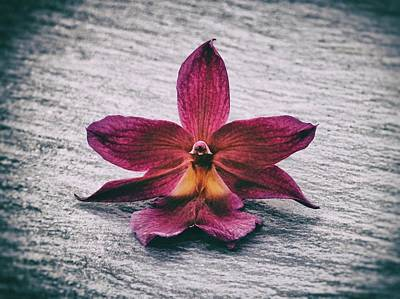 Wilting Orchid  Art Print
