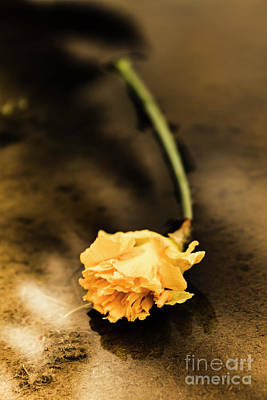 Neglect Photograph - Wilting Puddle Flower by Jorgo Photography - Wall Art Gallery