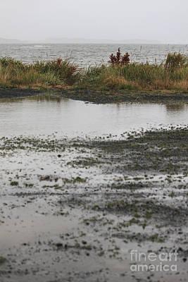 Rain Photograph - Wind And Rain Beach by Carolyn Brown