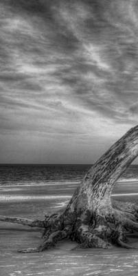 Photograph - Wind Bent Driftwood Black And White 1 Of 3 Left by Greg Mimbs