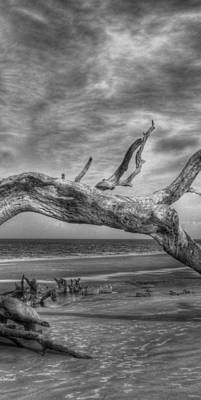 Photograph - Wind Bent Driftwood Black And White 2 Of 3 Center by Greg and Chrystal Mimbs
