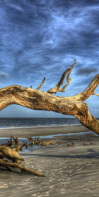 Jekyll Island Photograph - Wind Bent Driftwood Center 2 Of 3 by Greg Mimbs