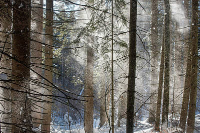 Photograph - Wind Blowing In Winter Forest by Arterra Picture Library